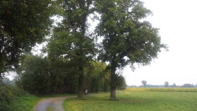 two oaks 2 lores